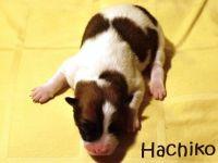 04_Hachiko1