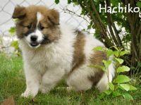 04_Hachiko5
