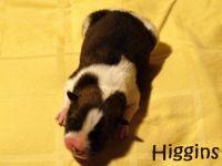 06_Higgins01