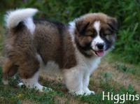 06_Higgins3