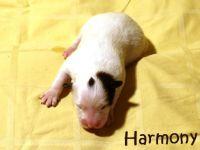 09_Harmony01