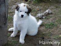 09_Harmony2
