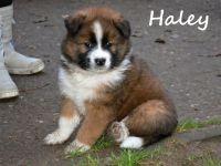 05_Haley04
