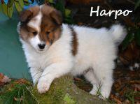 06_Harpo04