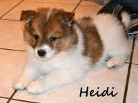 08_Heidi04