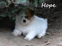 12_Hope04