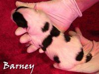 Barney_01