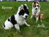 C_Barney_und_Bella