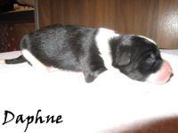 Daphne01