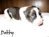 Dobby01