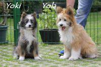 z_yoki_und_yola