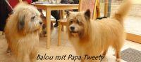 11_Balou1