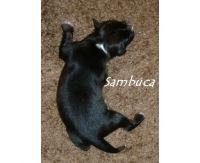 07_Sambuca_01