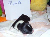 05_Paule_1