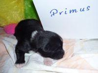 07_Primus_1