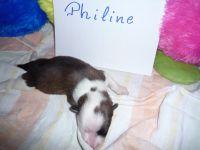 10_Philine_1