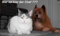 Z_Chef